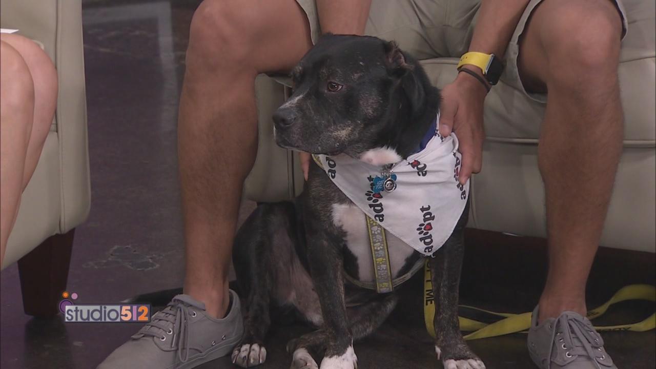 Austin_Dog_Rescue_0_20180726213223