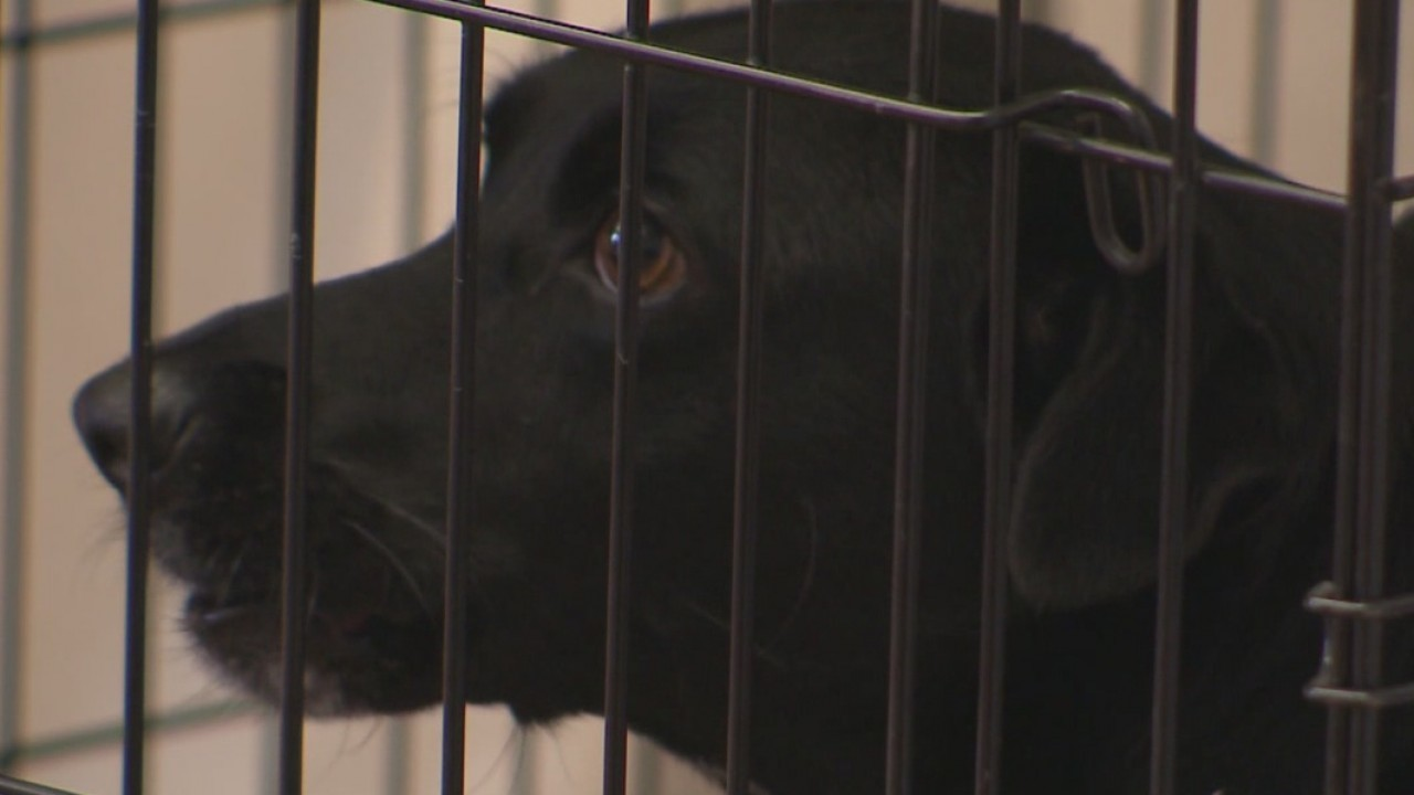 Austin animal shelter overcrowding