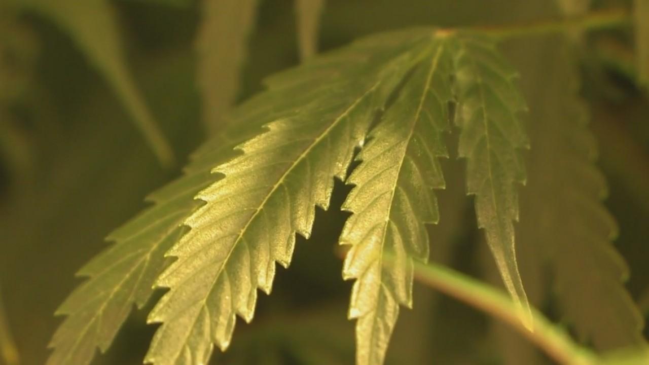 Marijuana_decriminalization_debate_light_10_20190316011730