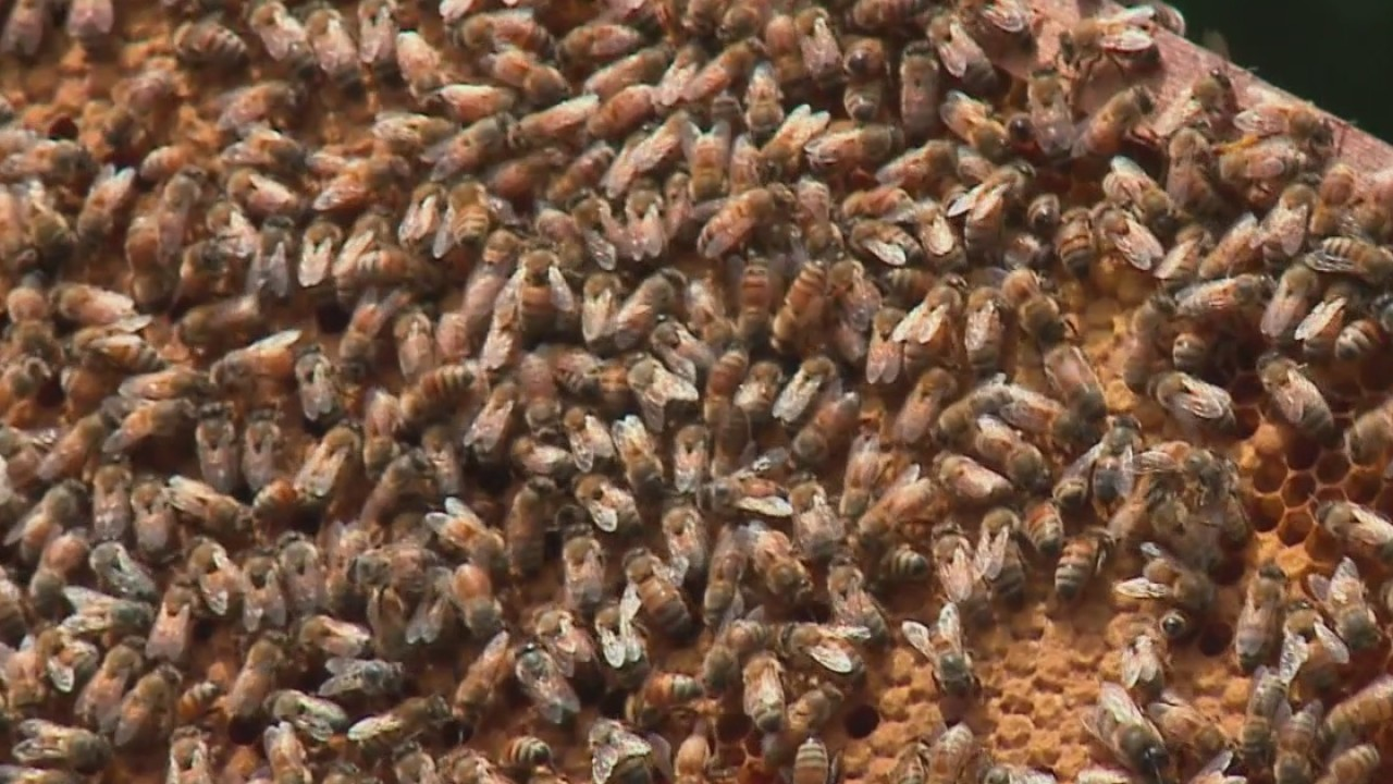 What_s_the_buzz_on_bees_in_Texas__1_20190423001533