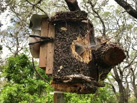 Texas Backyard Wildlife Livestream