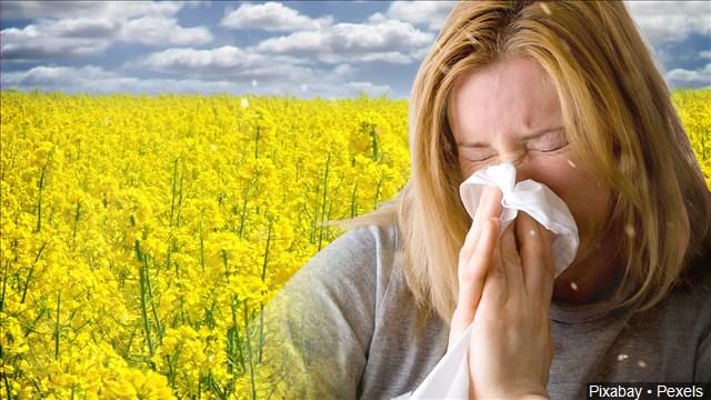 pollen_mgn_640x360_70419B00-QQLMN_1526661076878.jpg