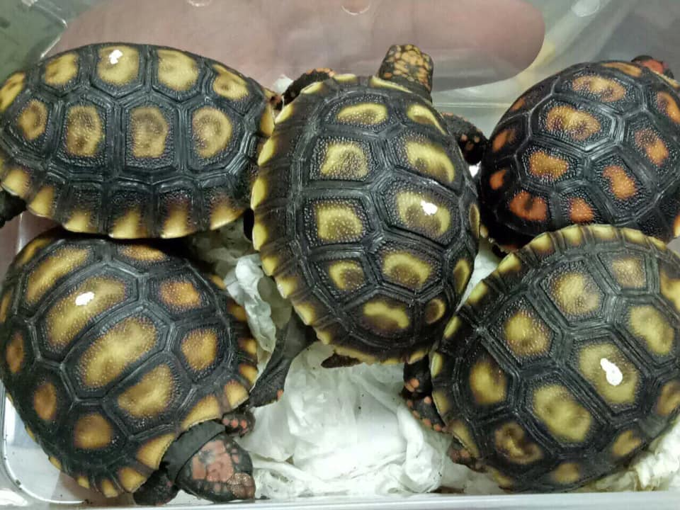 turtles_1551720856168.jpg