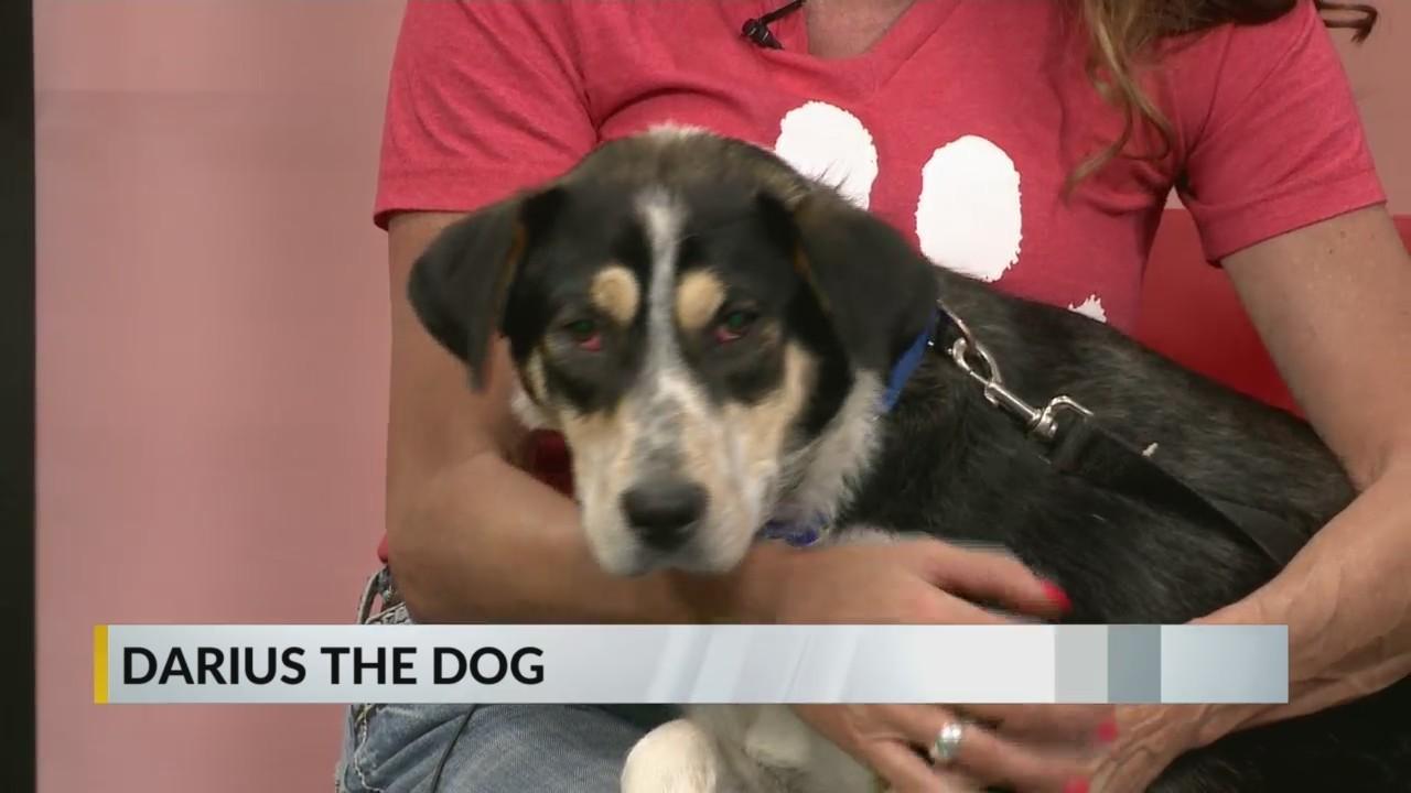 Furry Friday: Meet Darius the Dog
