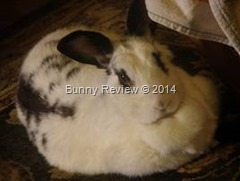 I Was Good! Not Bad! #Bunny @Houserabbit #MondayBlogs