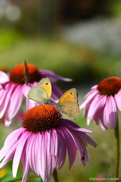 two butterflies looking like in love