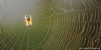 Spider on a web in the sunset by Kyesos