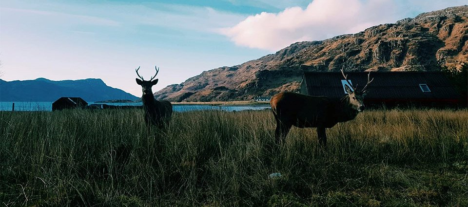 Knoydart Accommodation – Loch Nevis_0004_Loch_Nevis_Knoydart_Scenery (14)