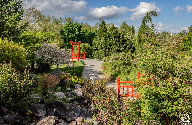 jardinjaponais - kyonyxphoto-serie-dijon-jardin-japonais-9.jpg
