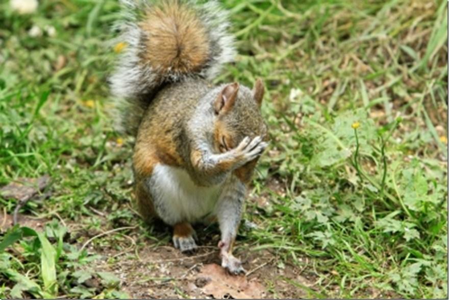 facepalm squirrel