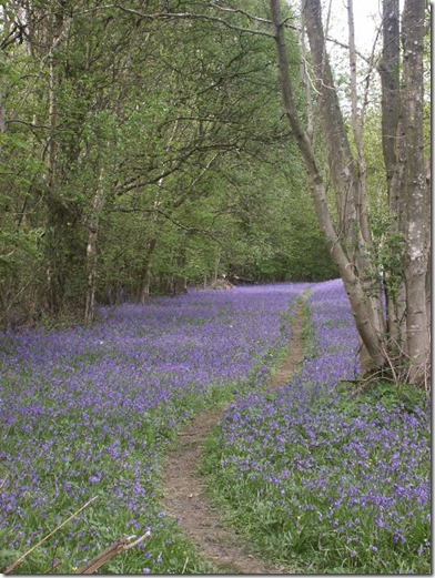 Foxley Wood Norfolk