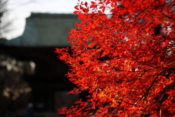 Autumn_at_Kuhonbutsu_Temple_Tokyo