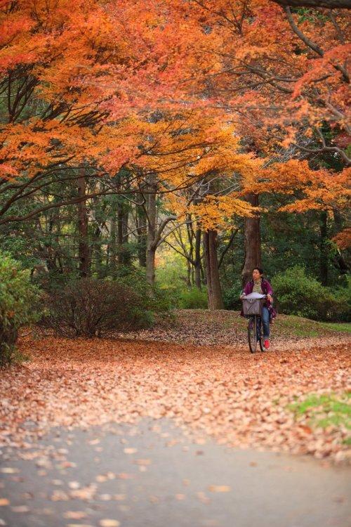 Showa_Kinen_Park_Autumn_Leaves_Tachikawa_in_Tokyo