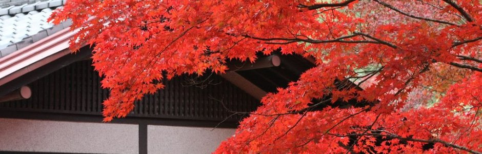 Autumn Leaves on Miyajima Island 2020