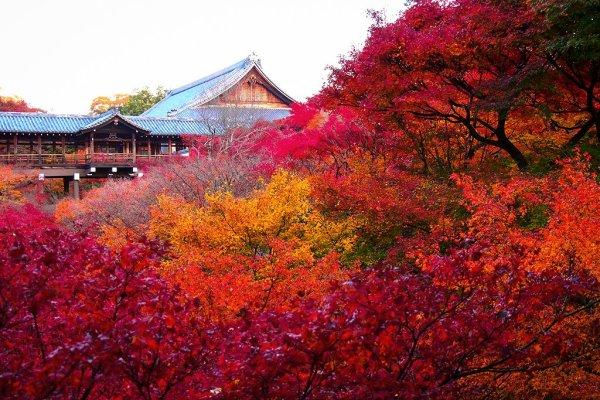 autumn_leaves_in_tofuku-ji_kyoto