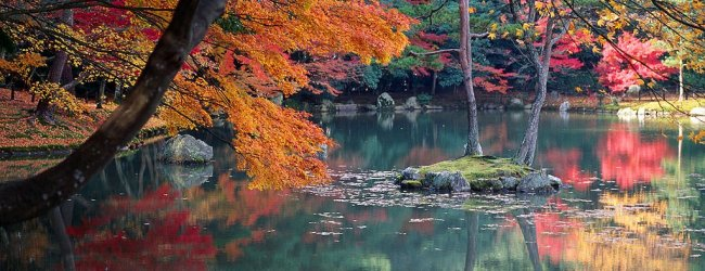 Autumn Leaves in Kyoto   Visit Kansai 2019