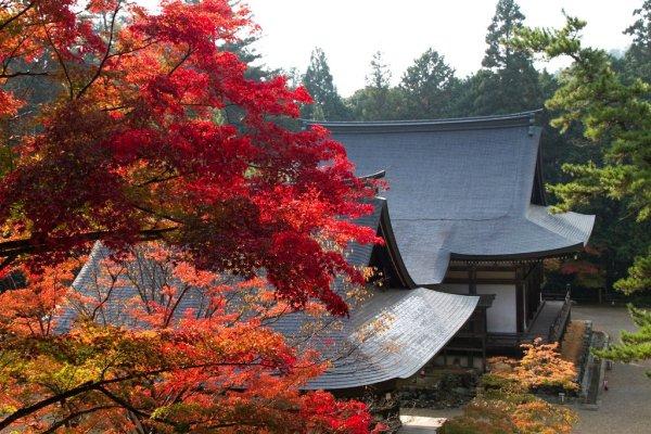 jingoji_temple_takao_kyoto