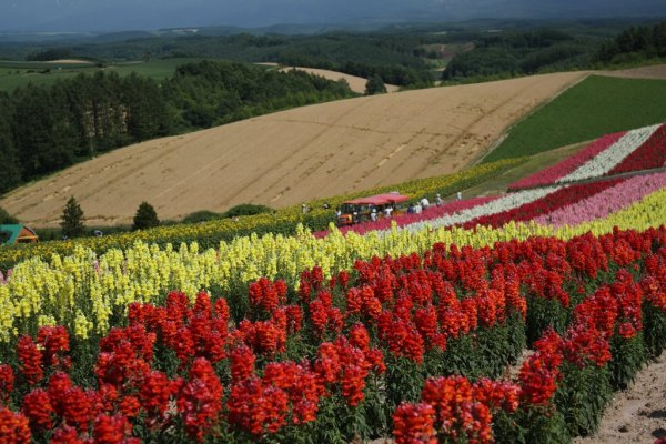 Shikisai-no-Oka_Flower_Garden_Hokkaido