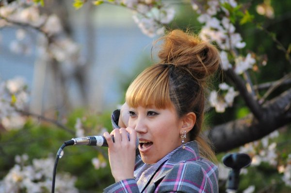 Hanami_Celebration_Singing_Under_Sakura_Tree