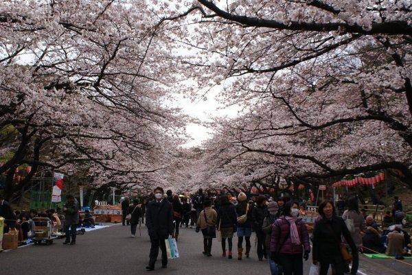 Hanami_in_Ueno_Park_Tokyo_Japan
