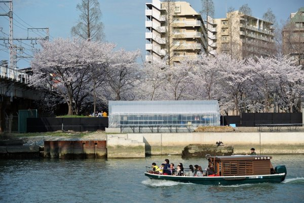 Sakura_Viewing_By_Boat_in_Japan