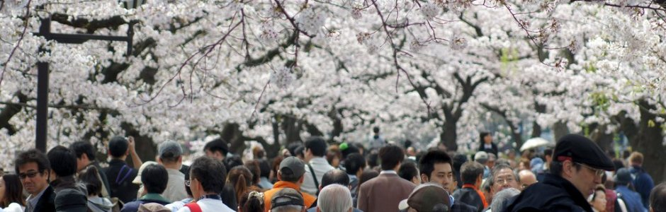 How to Hanami | Sakura Viewing Party Guide
