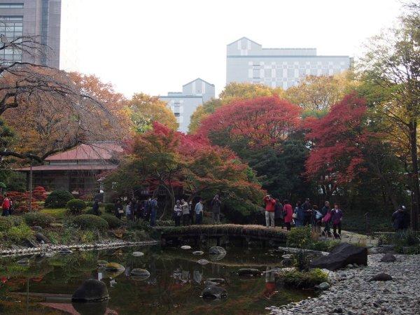 koishikawa_korakuen_autumn_foliage