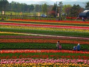 kamiyubetsu_tulip_fair