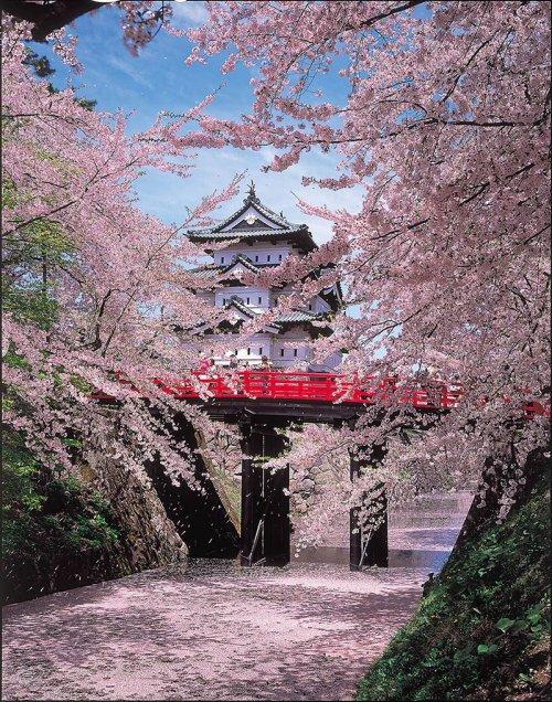 hirosaki_castle_cherry_blossom_festival