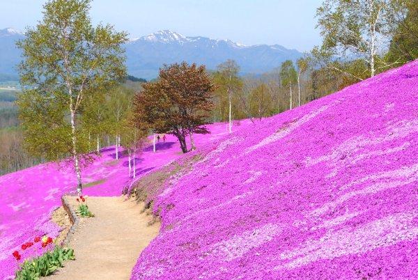 daisetsuzan_mountain_range_takinoue_park