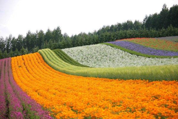 rainbow_flower_field_farm_tomita_furano_hokkaido