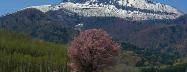 Hokkaido Spring Itinerary | Travel Plan 2020