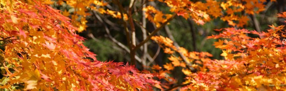 10 Best Places to see Autumn Leaves in Hokkaido