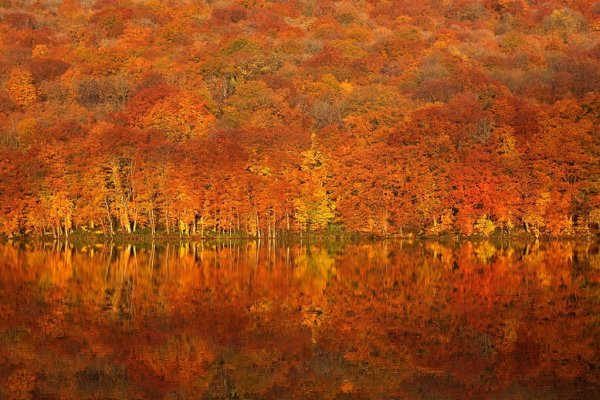 tsuta_numa_lake_autumn_colors