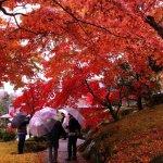 autumn_foliage_in_hakone