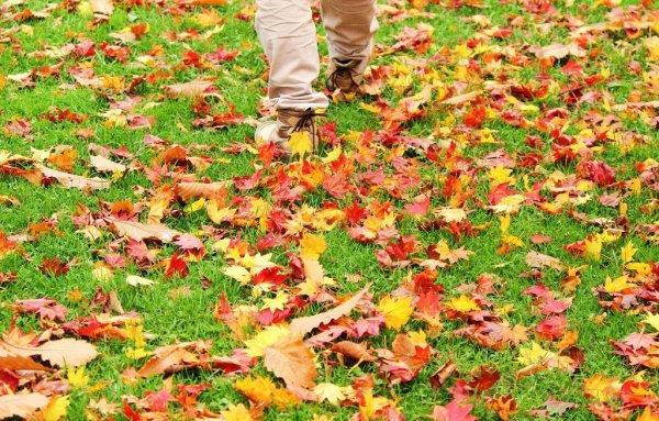 autumn_leaves_hokkaido