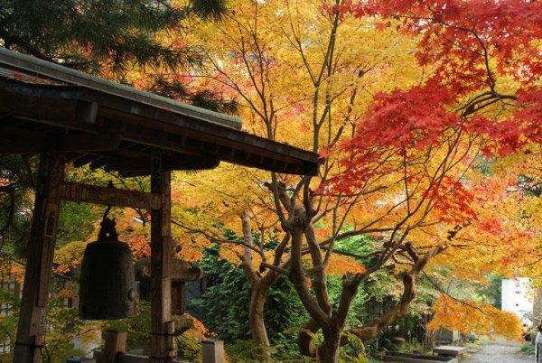 hokokuji_temple_in_autumn