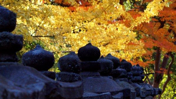 kasuga_taisha_fall_colors_nara