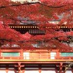 muroji_temple_autumn_leaves_nara