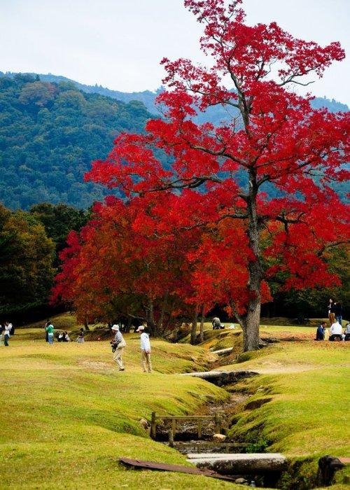 nara_park_in_autumn