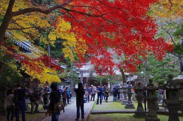 ryuanji_temple_osaka_japan