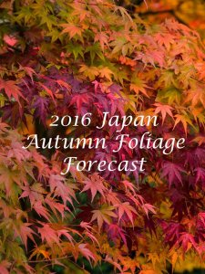 japan_autumn_foliage_forecast