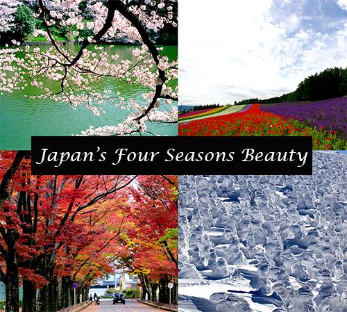 Japan Four Season Beauty Kyuhoshi