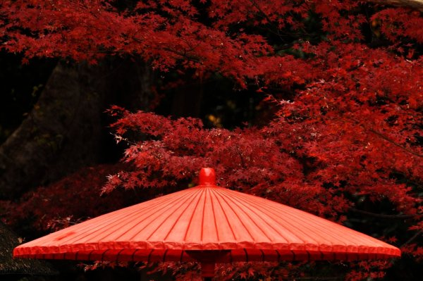 koishikawa_korakuen_red_maple_leaves