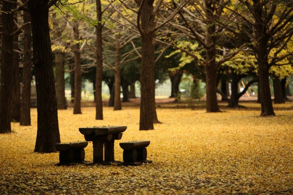 yoyogi_park_fall_foliage
