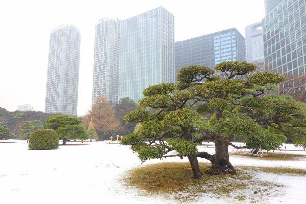 hama_rikyu_garden_in_winter_tokyo_japan