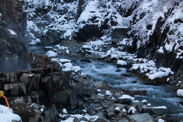 jigokudani_monkey_park_in_winter