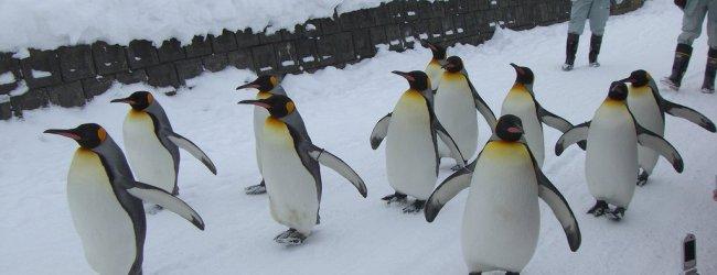 Hokkaido Winter Itinerary | Travel Plan 2021