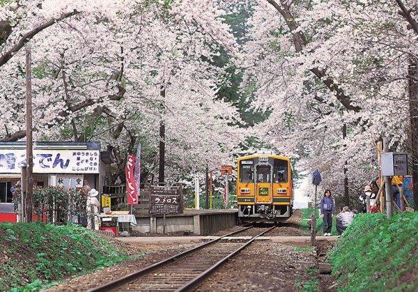 ashino_park_station_sakura