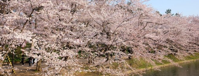 Tohoku Spring Itinerary | Travel Plan 2019